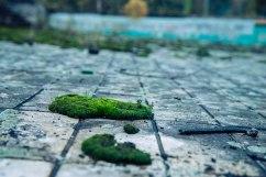Moss thrives