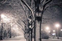 Tree trunk wears a white coat