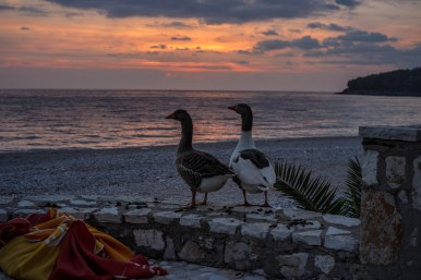 Sunset for two, geese