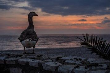 Goose Shit & Sunset