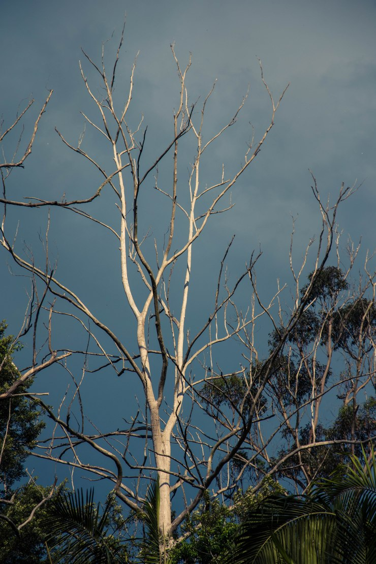 Ghost gum against storm