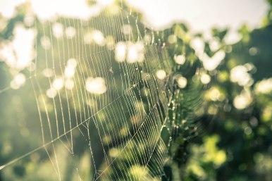 Web Of Flies & Dew