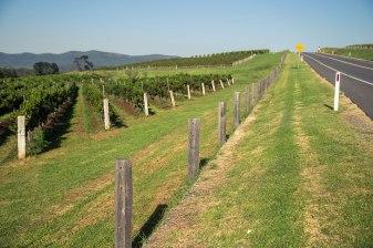 Diagonal Lines; Diagonal Vines